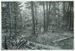 Осенний лес. 2011.Тушь,перо..jpg