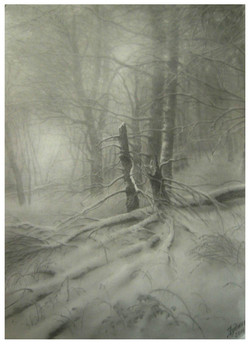 Иней в лесу. 2014. Б. кар..jpg