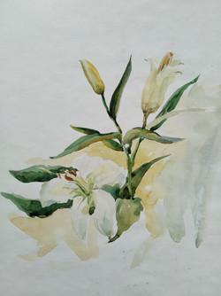 Рожнов АС 8