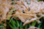 菠菜炒金針菇.jpg
