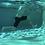 Thumbnail: Xtreme Aqua 2