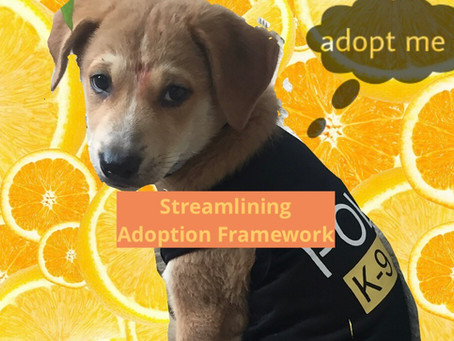 Streamlining Adoption Framework