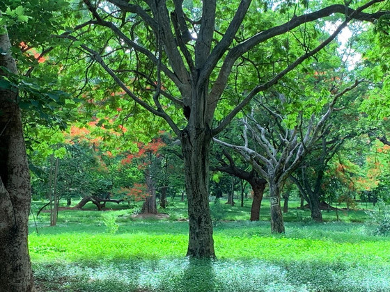 What next at Cubbon Park?
