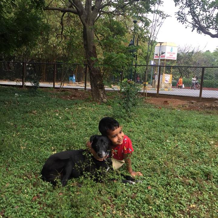 Sunday Dog Park