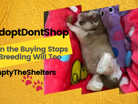 Empty The Shelters ( When the Buying Stops, the Breeding will Too)