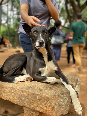 Animal Impact of the Bangalore Lockdown