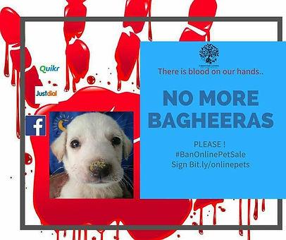 No More Bagheeras