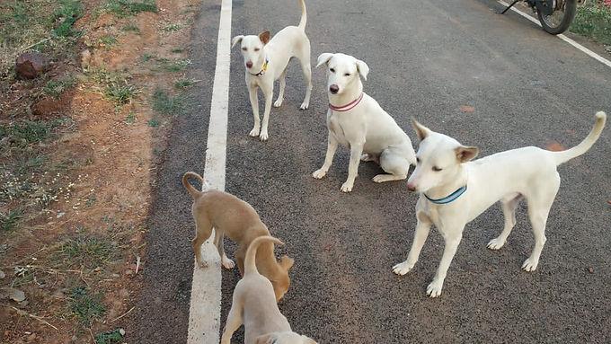We must have those 30 District SPCAs in Karnataka