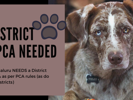Whither #DistrictSPCAs? How then can we prevent animal cruelty ?