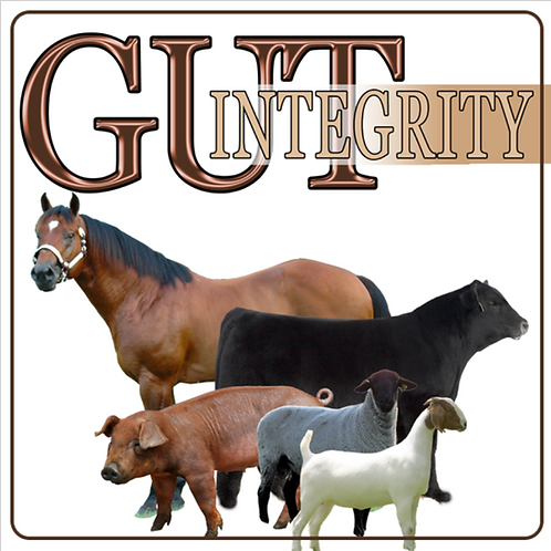 Gut Integrity for Show Livestock and Horses