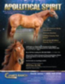 Apollitical Spirit poster 10.31.18.jpg