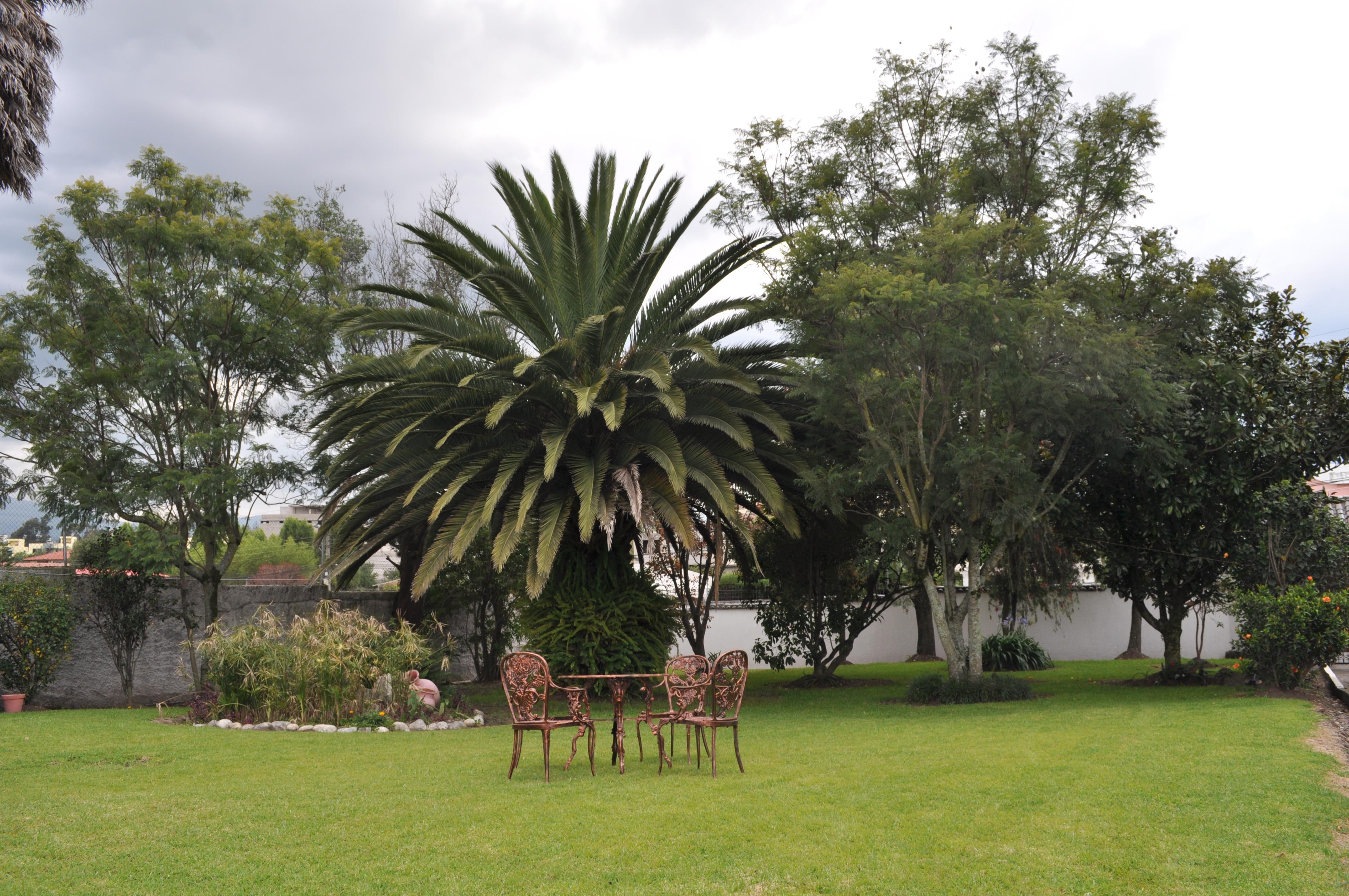 Oasis de Plata
