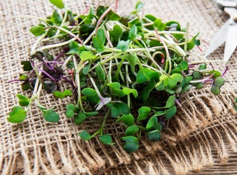heap-radish-micro-greens-old-wooden-surf