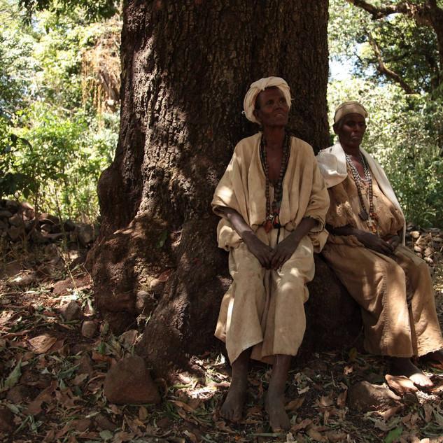 church forests ethiopia.jpg