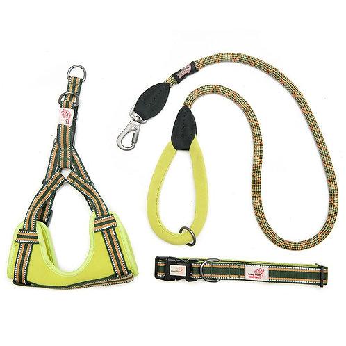 Green padded collar, harness & lead