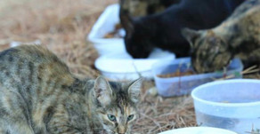 Campus Cats Relocated, Cause Community Concern
