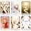 Thumbnail: White Light Oracle Deck