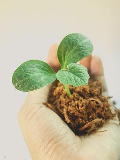 bioclimakit serre plant.jpg