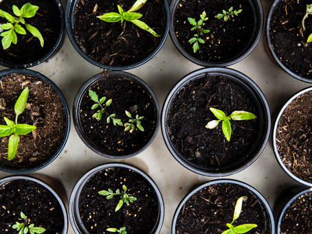 QUAND PLANTER ? On vous aide à optimiser vos récoltes toute l'année !