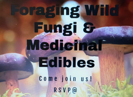 Wild Foraging for Fungi & Medicinal Edibles