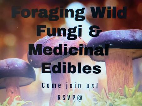 Wild Foraging for Fungi & Medicinal Edibles