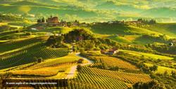 Tour lungo le strade dei vini del Piemonte