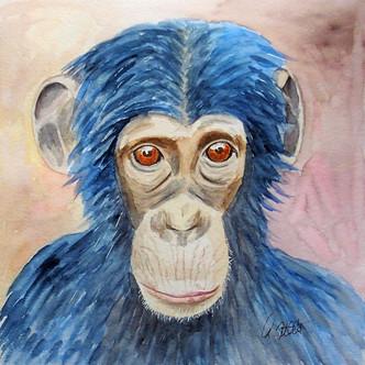 Schimpanse II