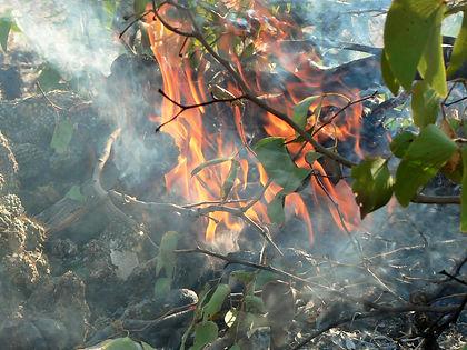 a23,1,0806 (72),fire.jpg