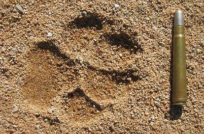 hyaene,spur,patrone (2).JPG