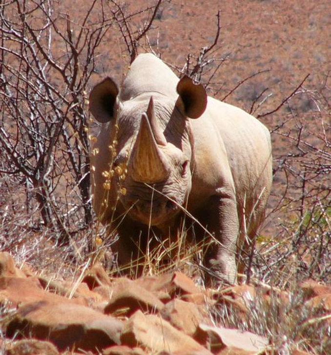 rhino,klippriver,1.JPG