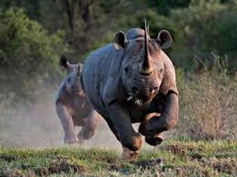 rhino,1999.jpg