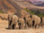 desert elephant,4.jpg