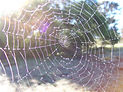 spider web removal