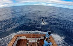 Sailfish Show Off