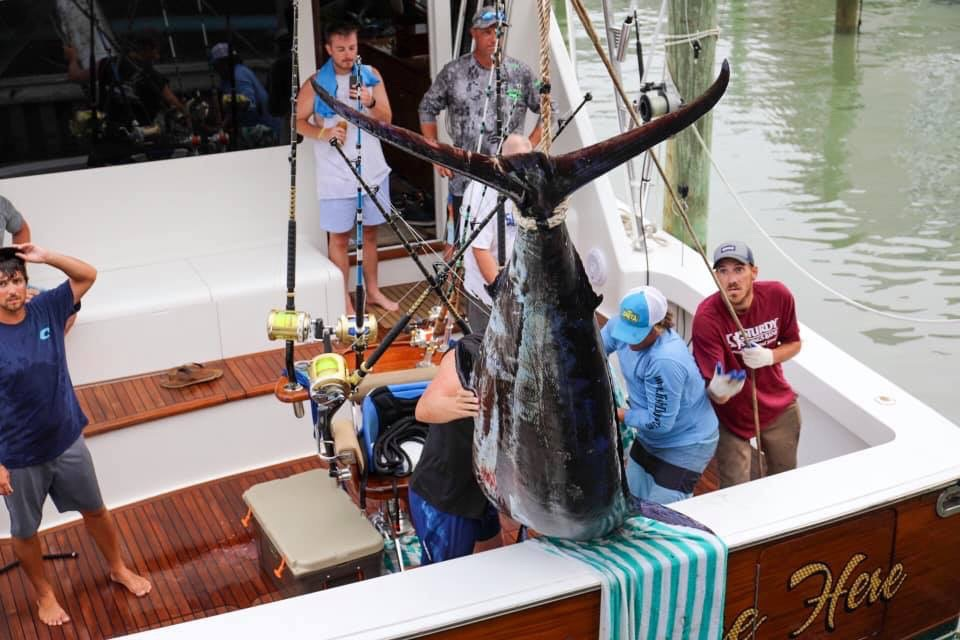 Blue Marlin Weigh In