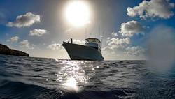 Picante sunshine anchored