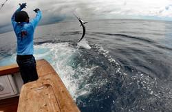 Sandy wiring a sailfish