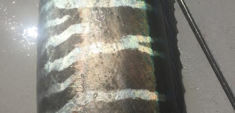 wahoo stripes