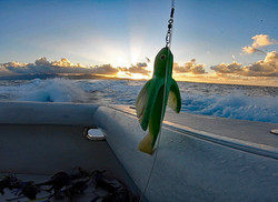 Green Flying Fish Ready