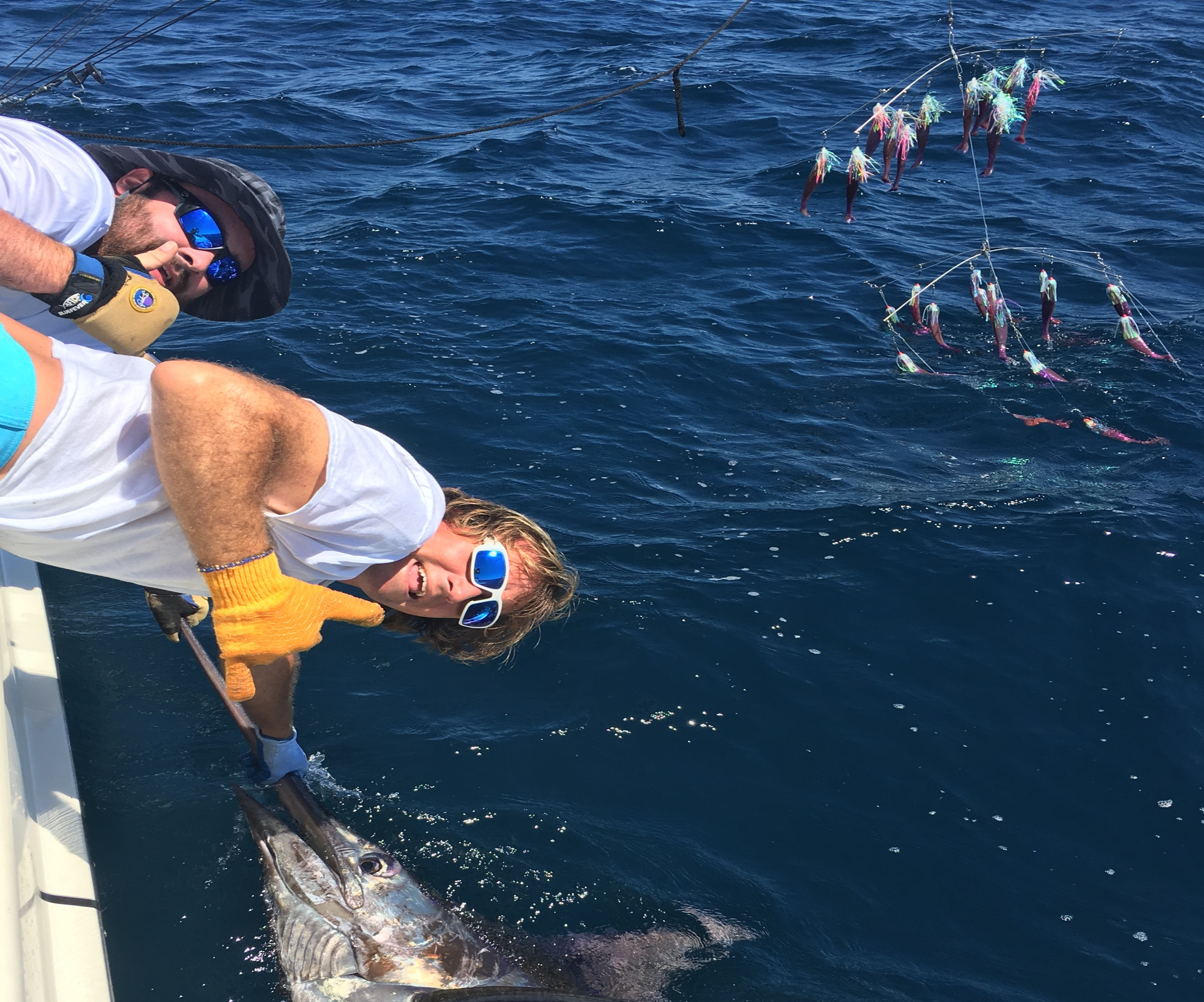 Blue Marlin off the Fish Downsea Complet