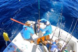 Fish Downsea whacking tuna