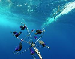 Fish Downsea Dredge White Marlin