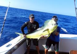 57.5 Bull Dolphin 1