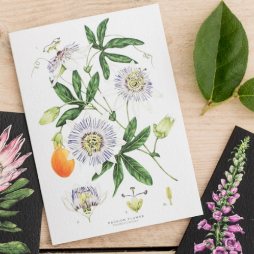 Botanical 'Passion Flower - White ' Card