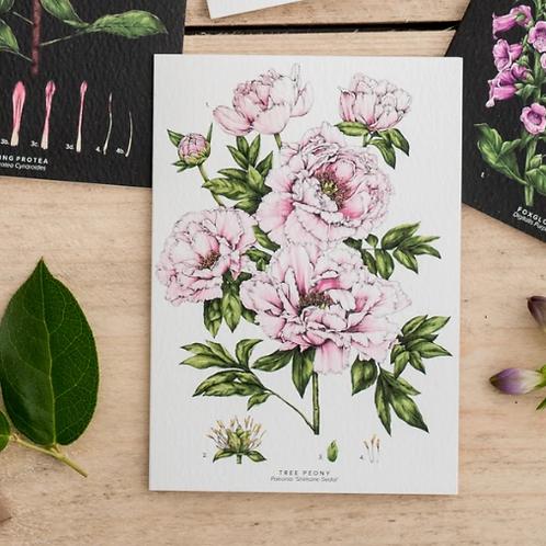 Botanical 'Tree Peony' Species Card