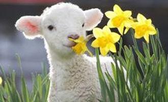 5a85552323724203210d1641c5765a44--daffodils-tulips_edited.jpg