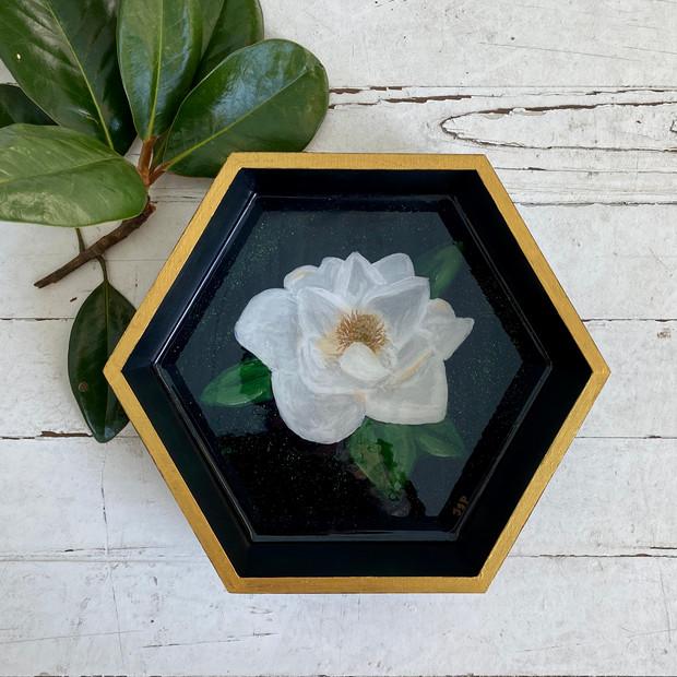 Encased Magnolia