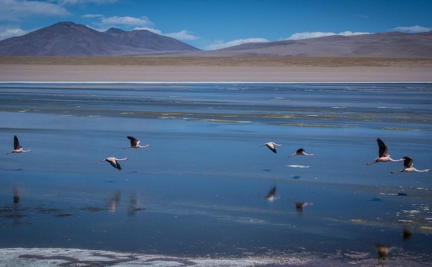 Bolivia, 3 day tour 'Region Lipez' (16)