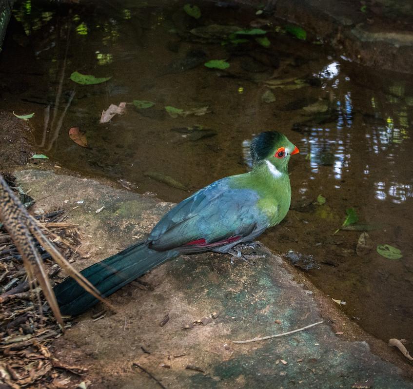 Brazil, Parque das Aves (7)