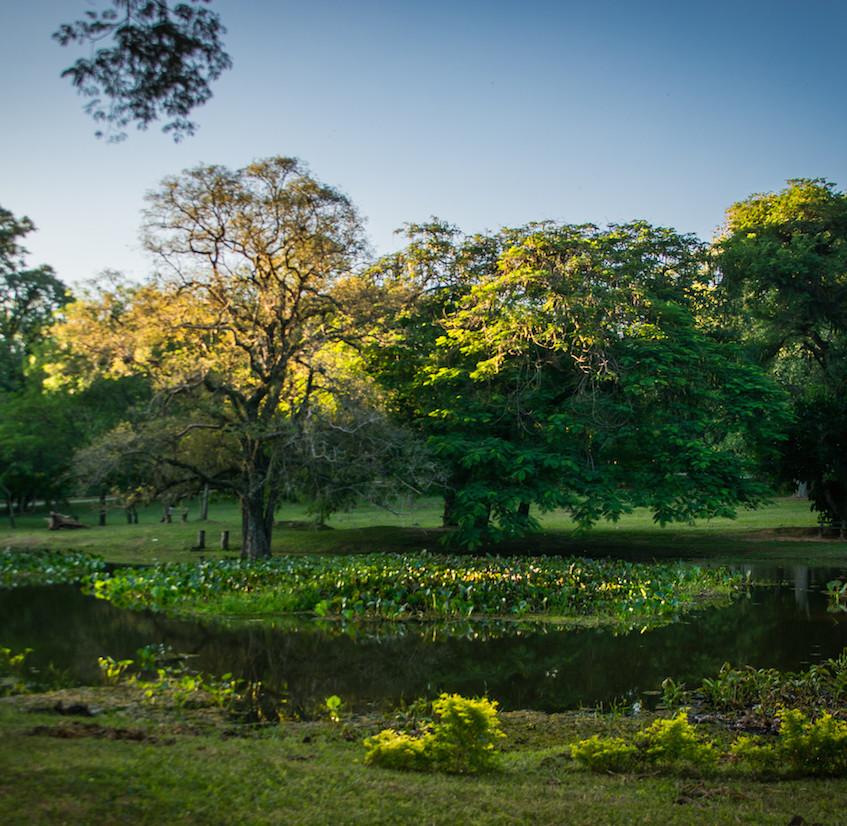 Paraguay, Asunción; Jardin Botanico (2)